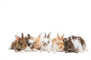 Rabbit Awareness Week 2016