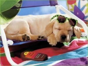 Dog in the sun 20160708